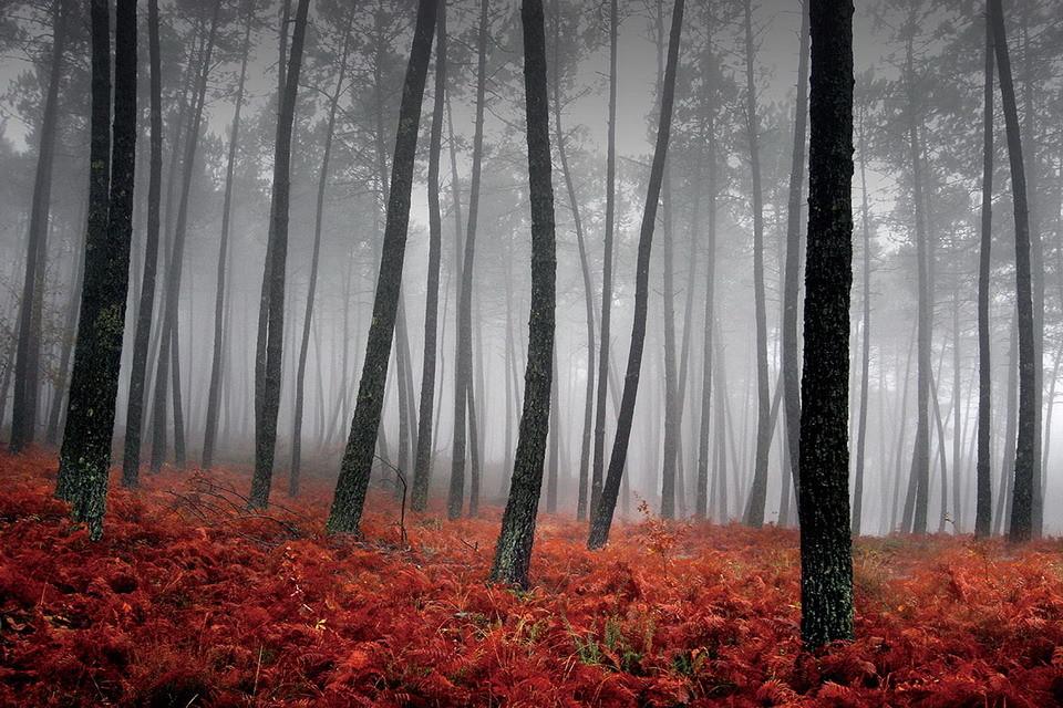 glasbilder forest red leaves bei. Black Bedroom Furniture Sets. Home Design Ideas
