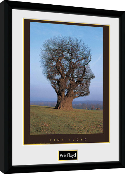 pink floyd tree gerahmte poster bilder kaufen bei europosters. Black Bedroom Furniture Sets. Home Design Ideas