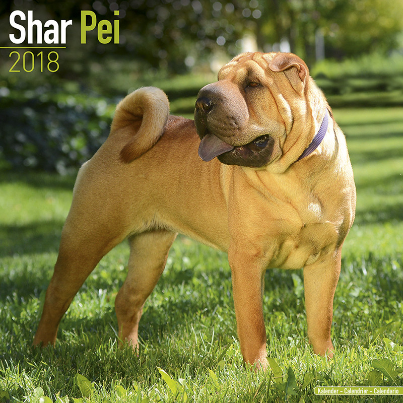 Calendario 2019 Shar Pei - EuroPosters.it
