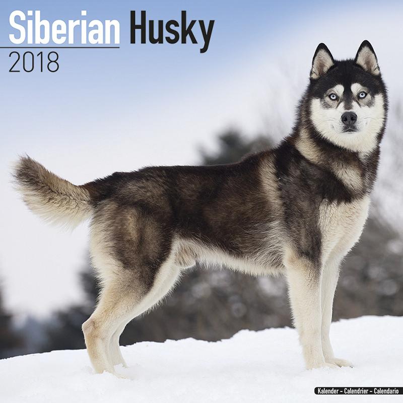 Risultati immagini per Husky,