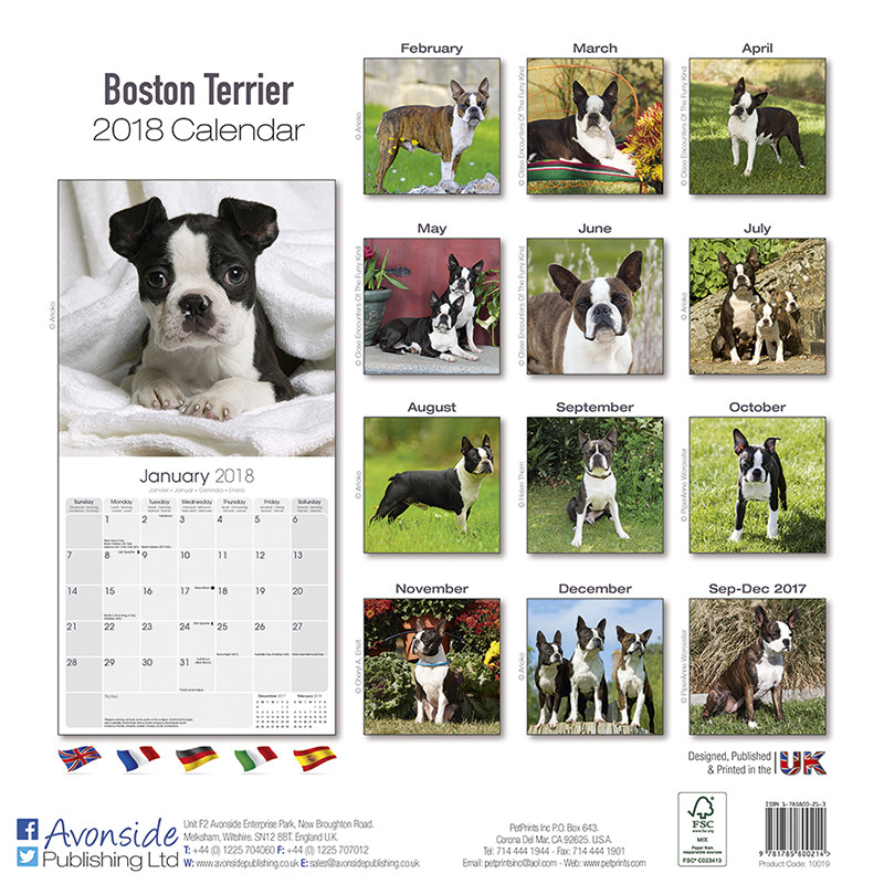 Boston Terrier - Calendarios 2019