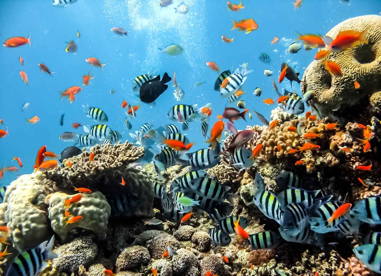 abbastanza Carta da parati - Ambiente Marino Coralli Pesce | EuroPosters.it MC51