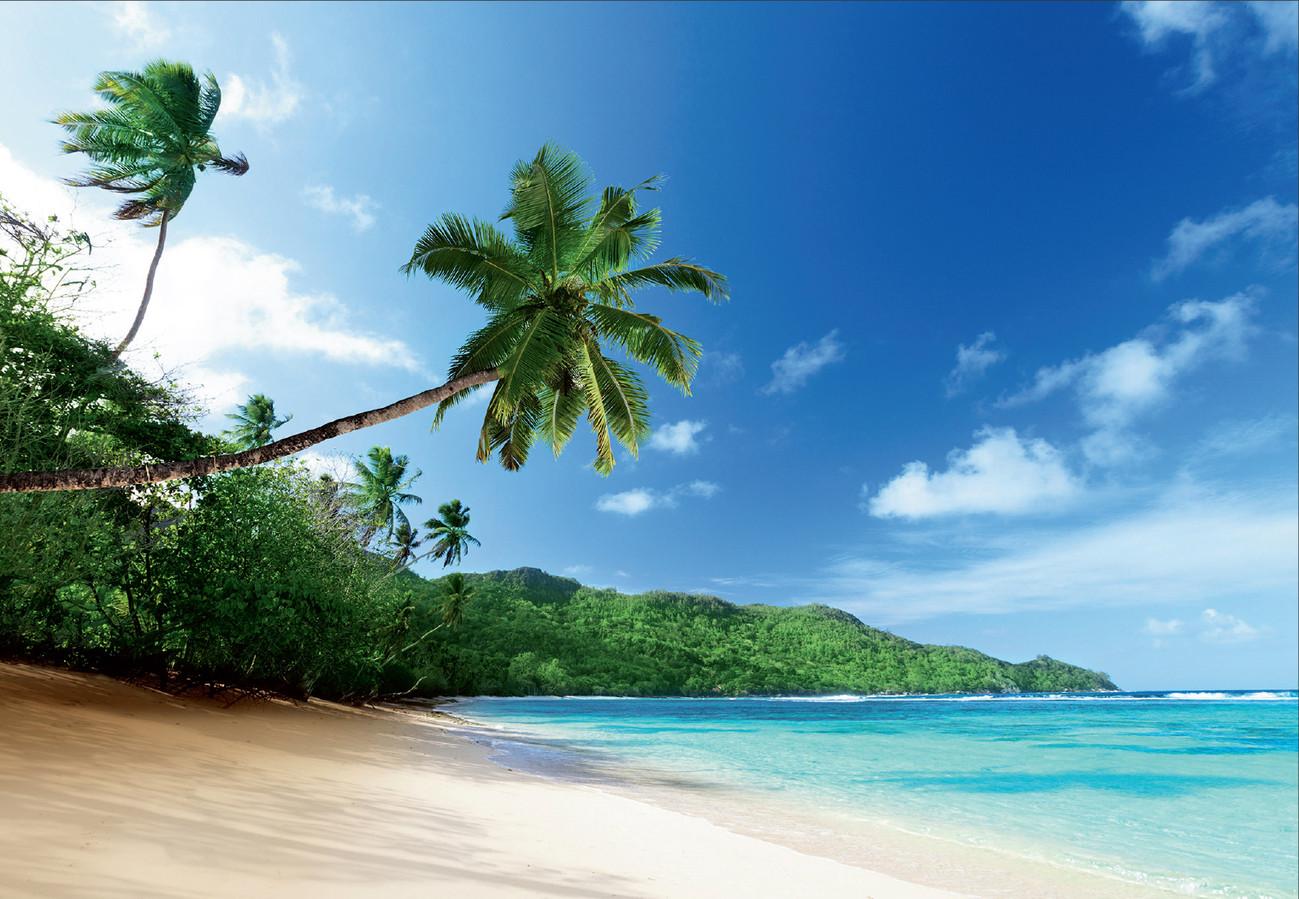 strand palm fotobehang behang bestel nu op. Black Bedroom Furniture Sets. Home Design Ideas