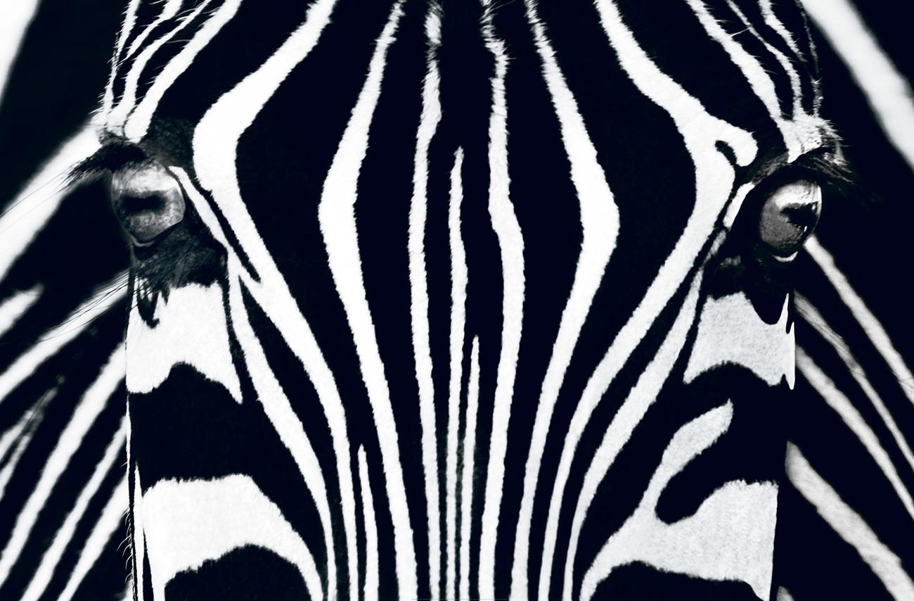 Fotobehang Slaapkamer Zwart Wit : Black and White Zebra