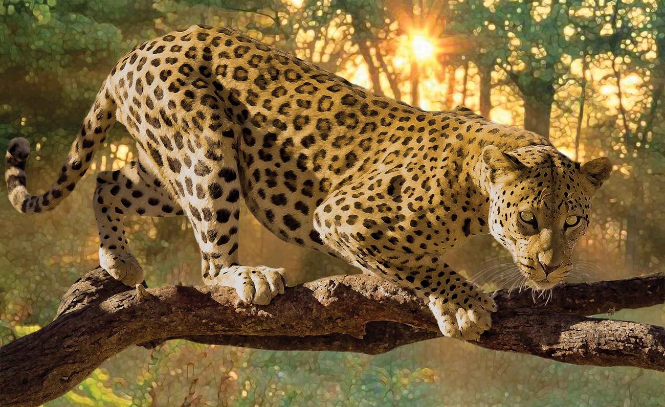 fototapete tapete leopard bei europosters kostenloser versand. Black Bedroom Furniture Sets. Home Design Ideas