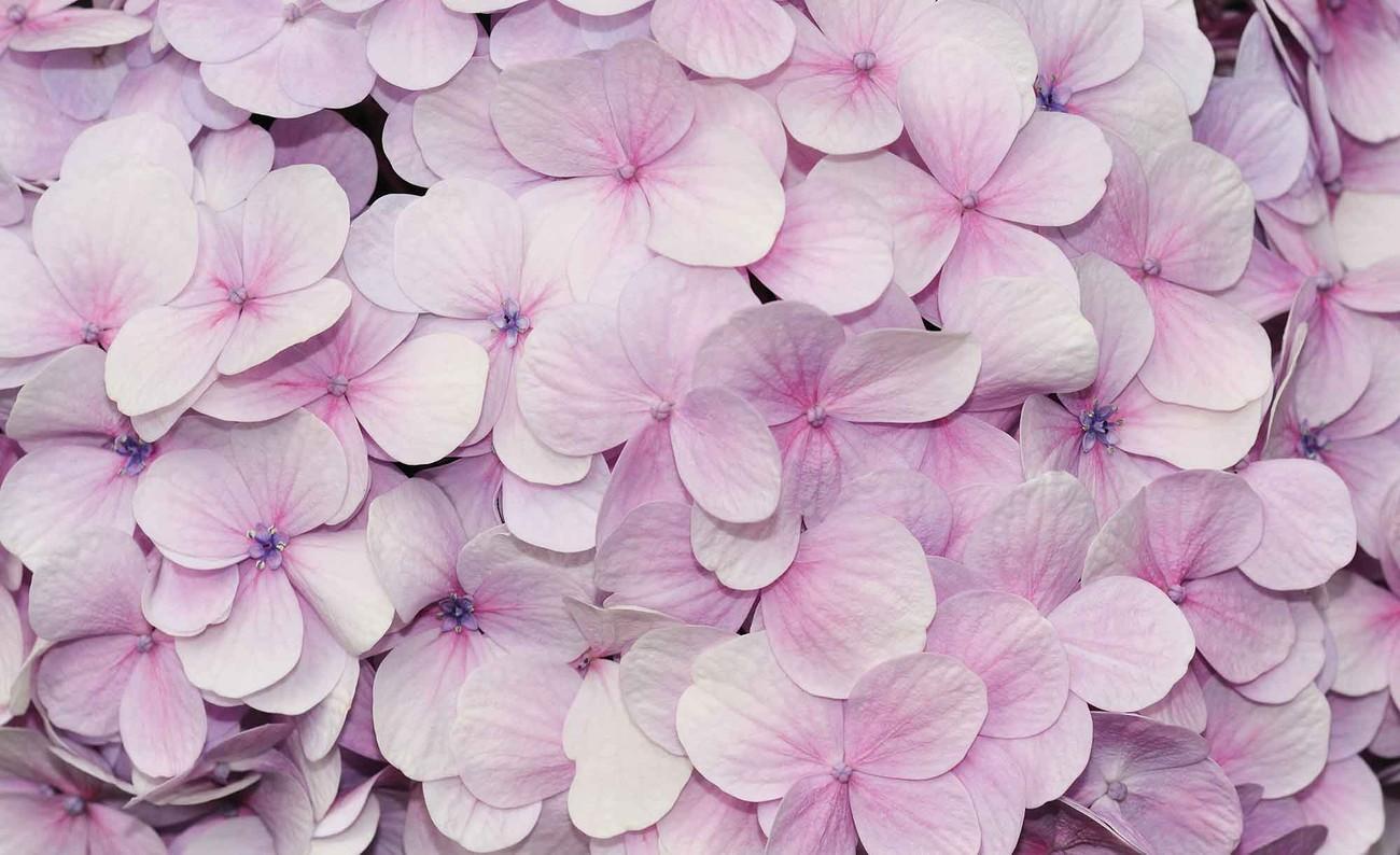 fototapete tapete lila blumen blumenmuster bei europosters kostenloser versand. Black Bedroom Furniture Sets. Home Design Ideas