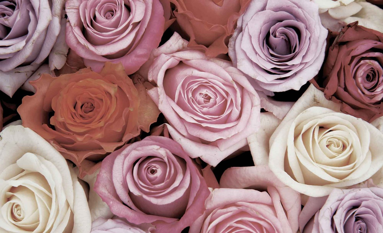 fototapete tapete rosen blumen rosa lila rot bei europosters kostenloser versand. Black Bedroom Furniture Sets. Home Design Ideas