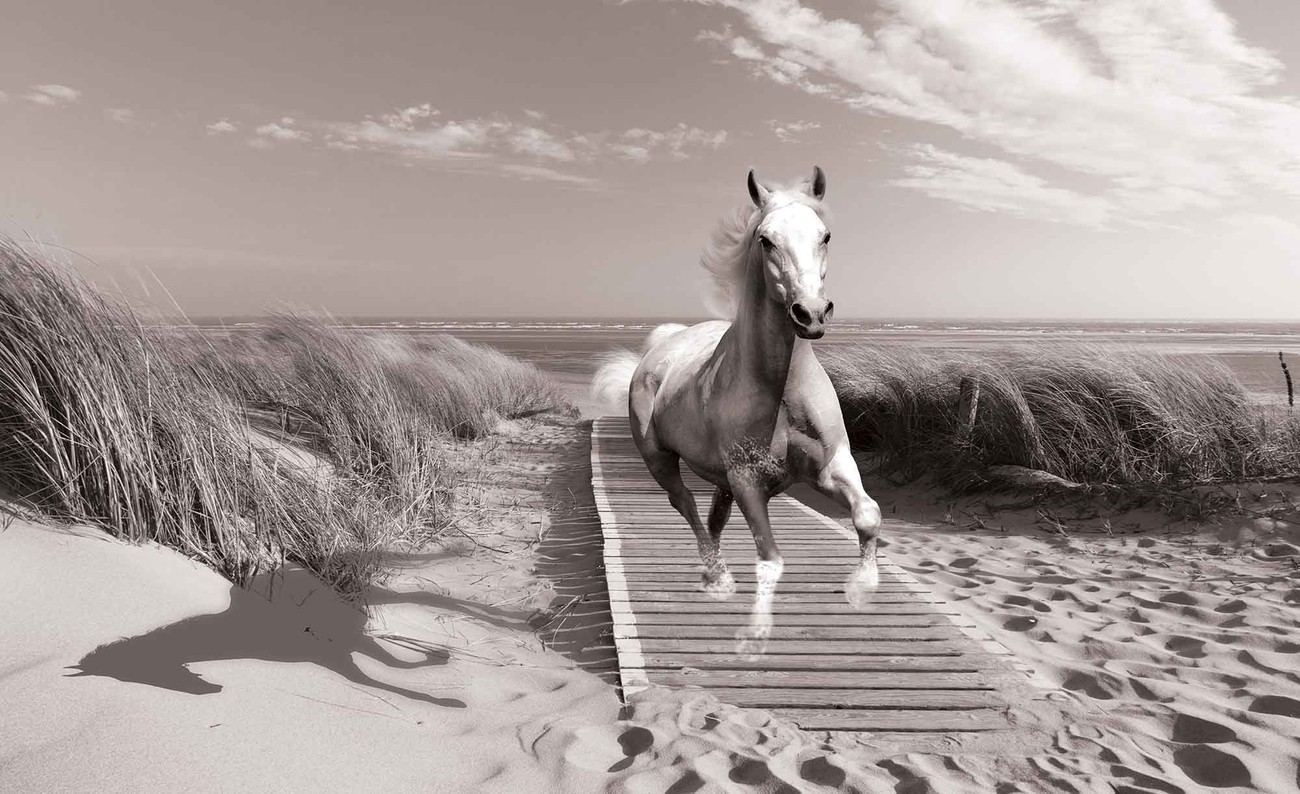 fototapete tapete wei er pferd strand grau bei europosters kostenloser versand. Black Bedroom Furniture Sets. Home Design Ideas