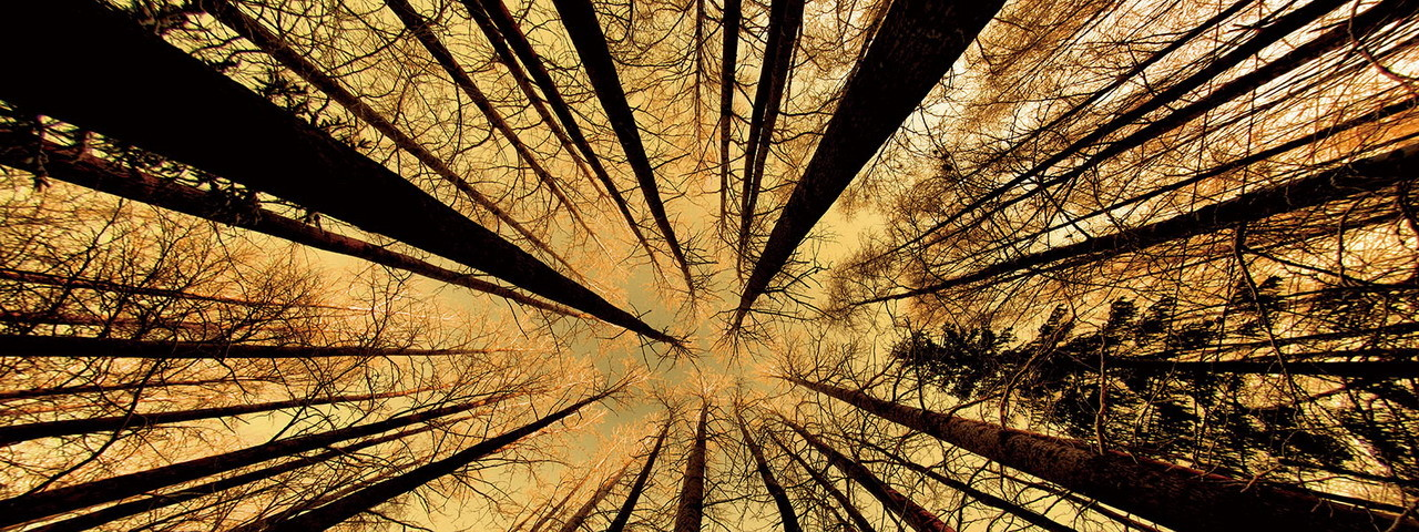 Glasbilder Forest - Gold Sun