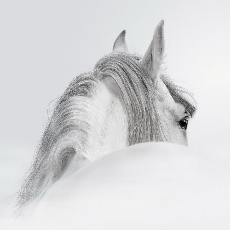 White Horse Glasschilderij Op Europostersbe