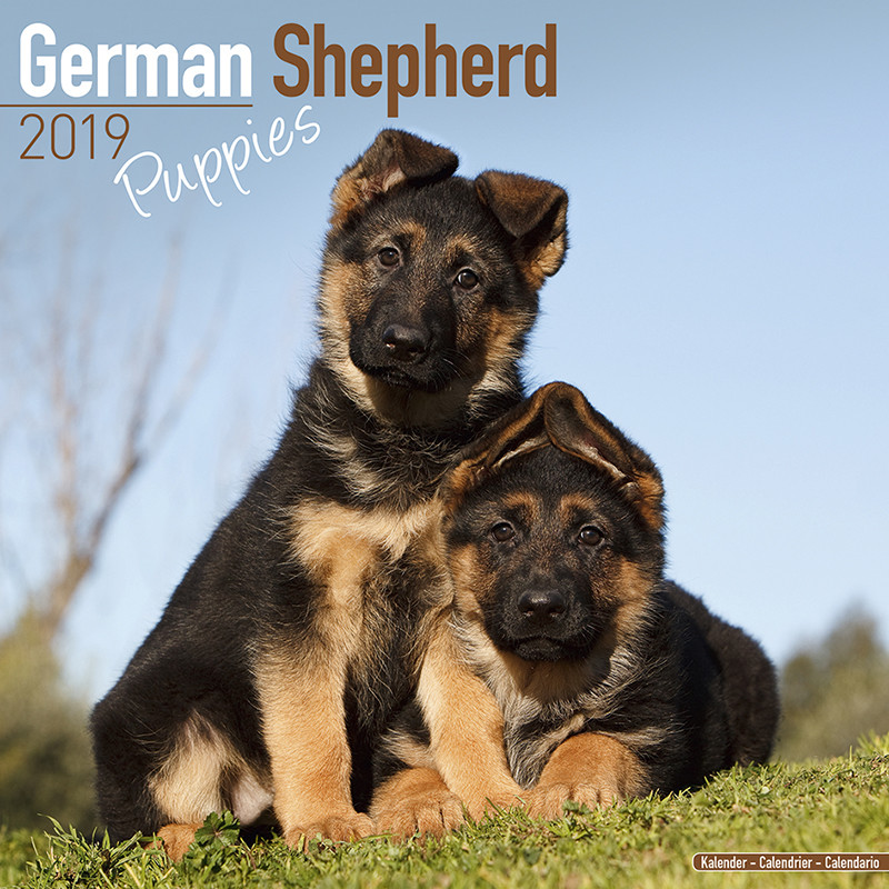 bestel een german shepherd puppies kalender 2019 op. Black Bedroom Furniture Sets. Home Design Ideas