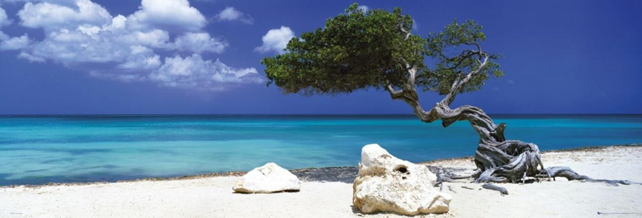 Divi divi tree - Tom Mackie Plakat