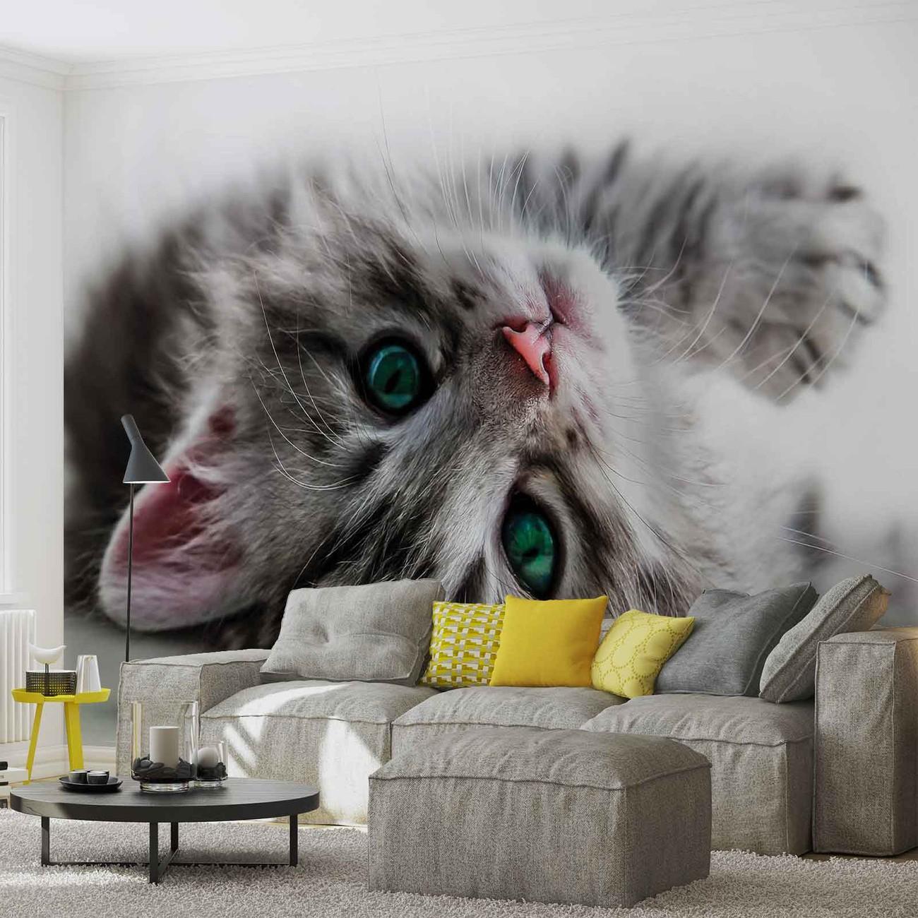 chat chaton poster mural papier peint acheter le sur. Black Bedroom Furniture Sets. Home Design Ideas
