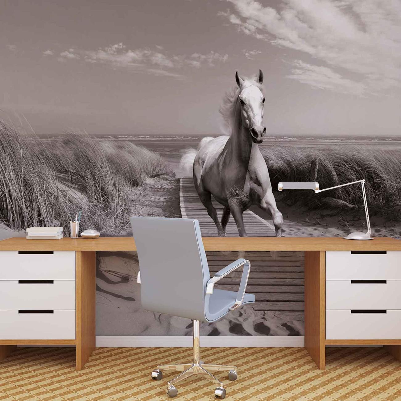 cheval blanc sur la plage gris poster mural papier peint acheter le sur. Black Bedroom Furniture Sets. Home Design Ideas