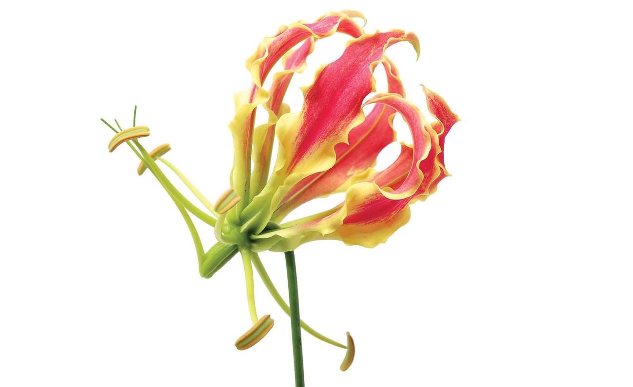 Fleurs for t nature poster mural papier peint acheter for Poster mural xxl fleurs