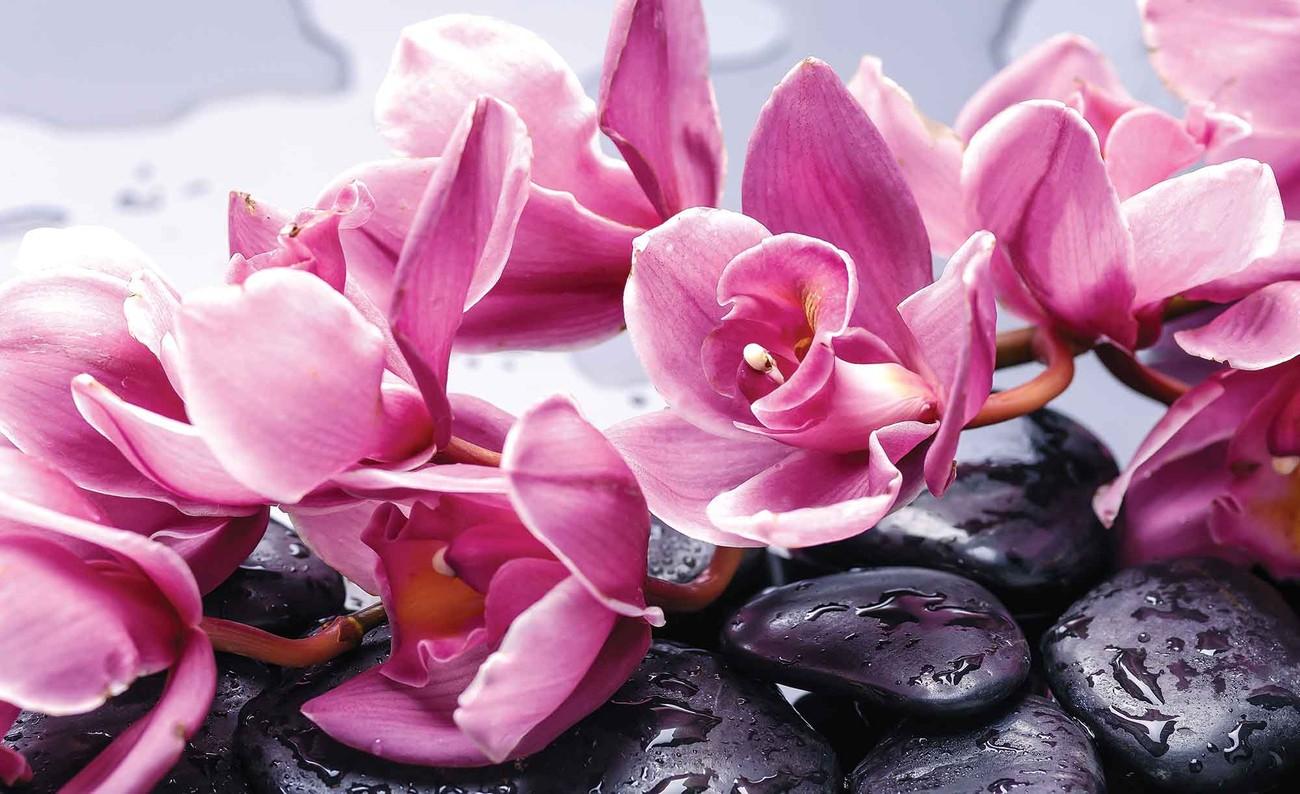 fleurs orchid es pierres zen poster mural papier peint acheter le sur. Black Bedroom Furniture Sets. Home Design Ideas