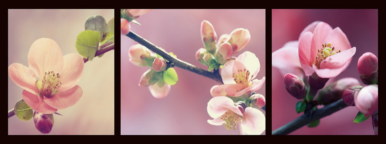 Üvegkép Pink World - Pink Orchid