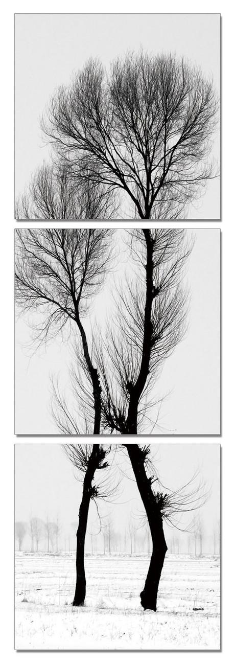 wandbilder bilder modern design black and white tree bei europosters. Black Bedroom Furniture Sets. Home Design Ideas