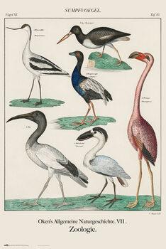 Αφίσα Vintage Birds
