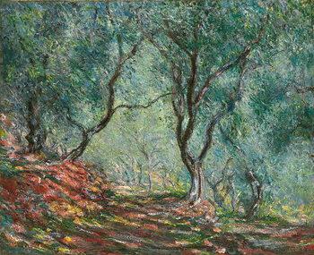 Εκτύπωση καμβά Olive Trees in the Moreno Garden; Bois d'oliviers au jardin Moreno