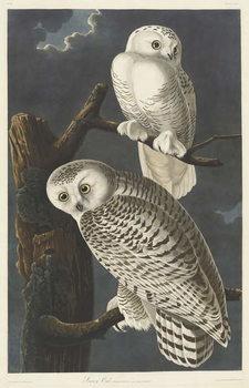 Εκτύπωση καμβά Snowy Owl, 1831