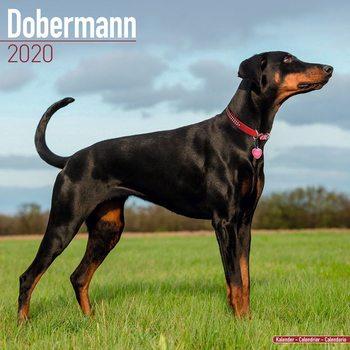 Ημερολόγιο 2022 Dobermann