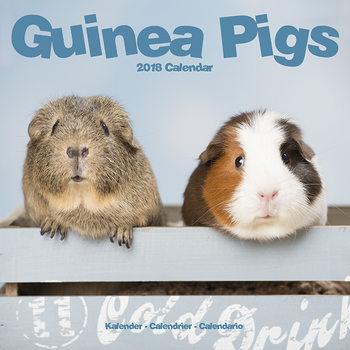 Ημερολόγιο 2022 Guinea Pigs