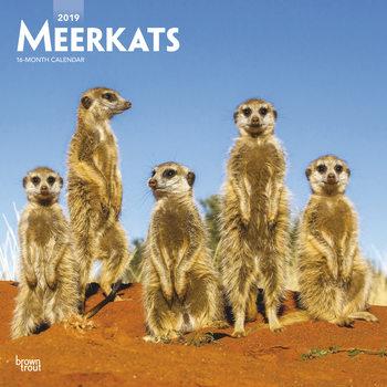 Ημερολόγιο 2022 Meerkats
