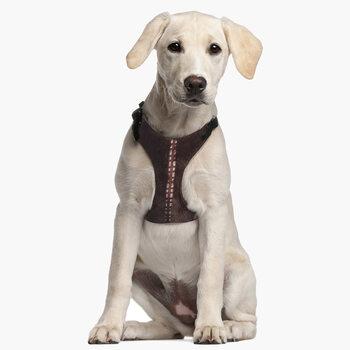 Σαμαράκι σκύλων Star Wars - Chewbacca