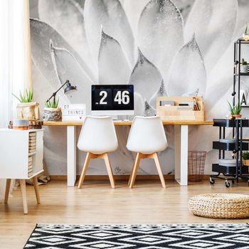 Ταπετσαρία τοιχογραφία Aloe Plant Black And White