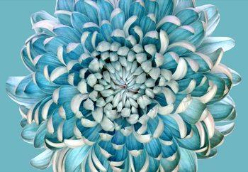 Ταπετσαρία τοιχογραφία Blue Chrysanth