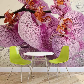 Ταπετσαρία τοιχογραφία Flowers Orchids Drops