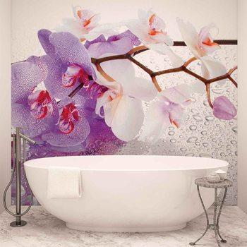 Ταπετσαρία τοιχογραφία Flowers Orchids Nature Drops