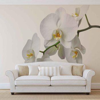 Ταπετσαρία τοιχογραφία Flowers Orchids Nature White