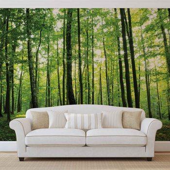 Ταπετσαρία τοιχογραφία Forest Trees Green Nature