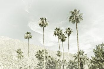 Ταπετσαρία τοιχογραφία Palm Trees in the desert | Vintage
