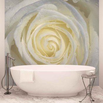 Ταπετσαρία τοιχογραφία Rose Flower White
