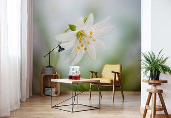 Ταπετσαρία τοιχογραφία Spring Stitchwort