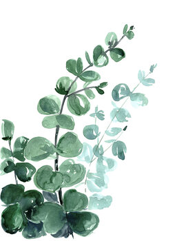 Ταπετσαρία τοιχογραφία Watercolor eucalyptus bouquet