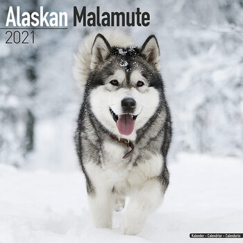 Alaskan Malamute Календари 2021