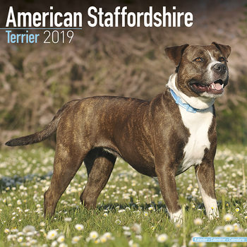 American Staffordshire Terrier Календари 2019