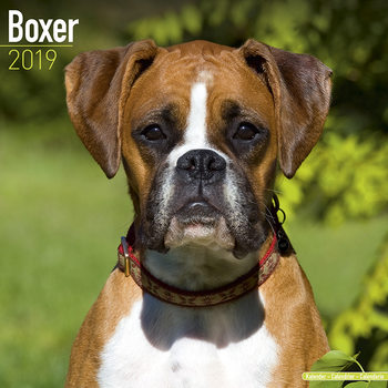 Boxer (Euro) Календари 2019