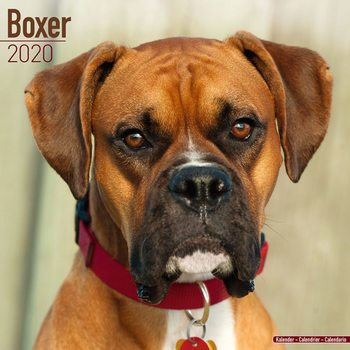 Boxer Календари 2020