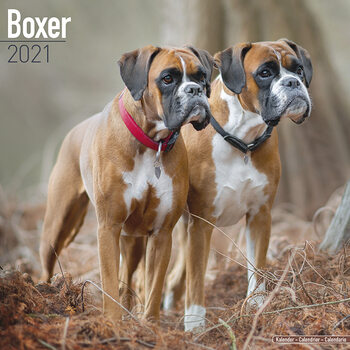 Boxer Календари 2021