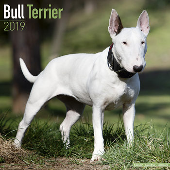 Bull Terrier Календари 2019