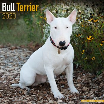 Bull Terrier Календари 2020