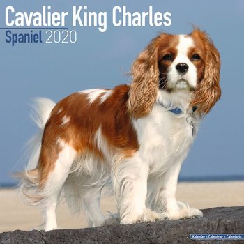 Cavalier King Charles Календари 2020