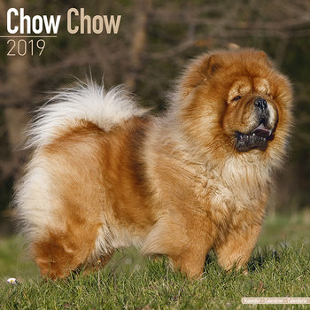 Chow Chow Календари 2019
