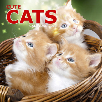 Cute Cats Календари 2017