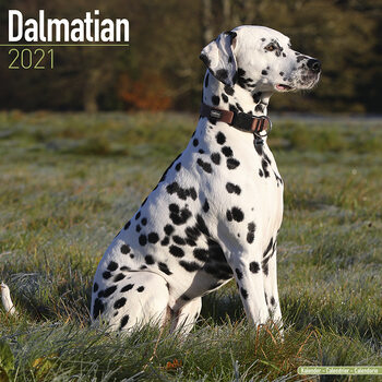 Dalmatian Календари 2021